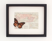 Framed Map of Puerto Rico with Real Butterfly Native to State