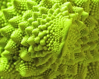 The Romanesco Cauliflower