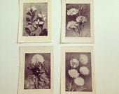 Flowers, Antique Photos