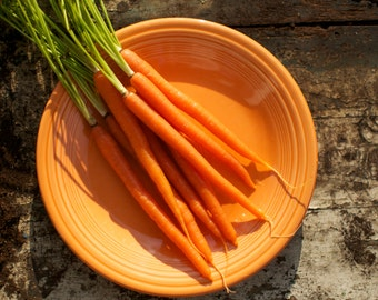Orange Danvers Carrot Seeds
