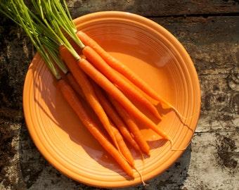 Orange Danvers Carrot Seeds