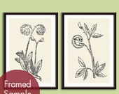 Curly Fern (Nature Field Study) Set of 2 - Art Poster Prints (Featured in Black and Cream) Customizable Colors
