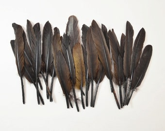 Middling Duck Quills, Stiff loose feathers - Dark Brown (20pcs) #19