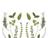 Herbs Garden. 8x10. Fine Art Photographic Print. Nature. Kitchen. Garden. Gifts for her