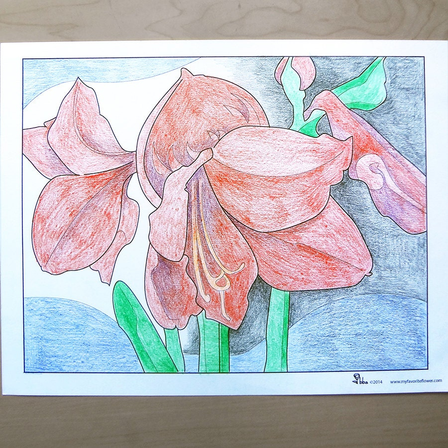 amaryllis coloring pages - photo#36