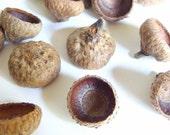 50 Unfinished Medium Oak Acorn Caps H
