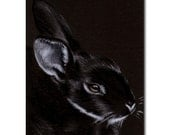 BUNNY 125 rabbit black dutch Easter pet pencil painting Sandrine Curtiss Art Limited Edition Print ACEO