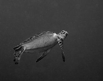 Sea Turtle Decor Black & White Underwater Photography print