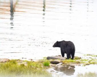 Black Bear, Travel Alaska, Wildlife Photo, Woodland Cabin Decor Fine Art Photo
