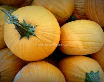 Pumpkin Photography, Autumn Still Life, Thanksgiving, Harvest Fall Photography, Fine Art Photo