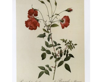 Redoute Red Rose Print Botanical Book Plate SALE~~Buy 3, get 1 Free Book Plates