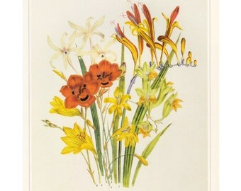 Jane Loudon Botanical Book Plate Lillies Yellow and Orange SALE Buy 3, get 1 Free