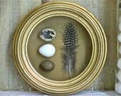 Bird Egg and Feather Under Glass - Gilt Framed - Natural Curiosity - Wunderkammer - Object De Curiosite