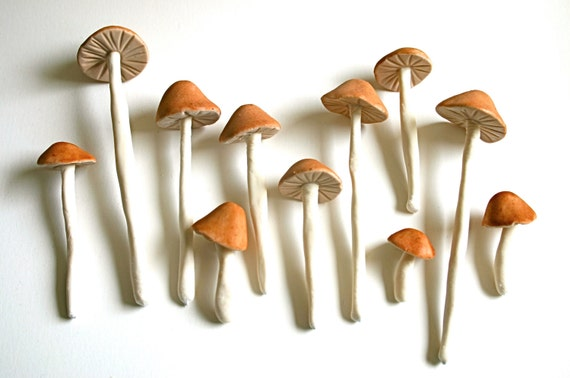 Edible Wild Sugar Mushrooms of the genus Psilocybe Cubensis 50 assorted -As Seen in Urban Outfitters-