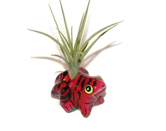 Frog planter with air plant. Great gift for plant lover or frog collector.