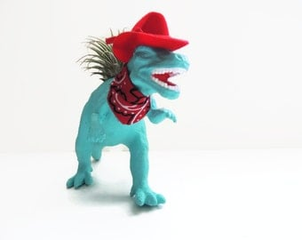 Cowboy dinosaur with live air plant.