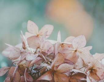 Hydrangea Floral Photograph, Ethereal, Pastel. Purple, Pink, Real, Romantic, Flower photograph, Pink Pastel Hydrangea, Wall decor, Feminine