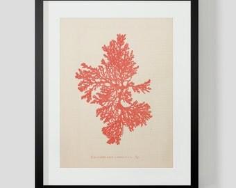Vintage Coral Ocean Life Print 4