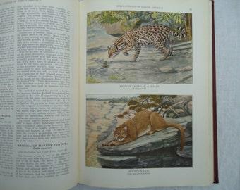 1930 illustrated book Wild Animals of North America