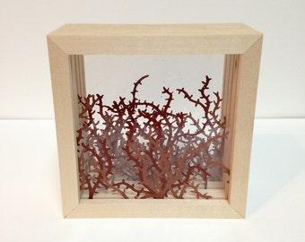 Thorny Shadow Box (small)