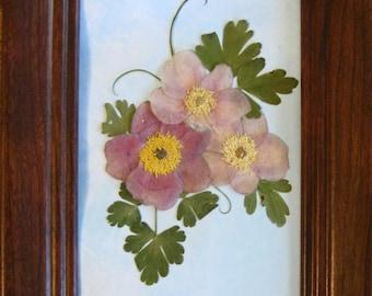 Pressed flowers-Japanese Anemones No. 239  NEW