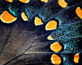 Butterfly Wings 8x10 Fine Art Photograph - Macro, Insect, Abstract