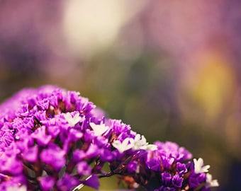 Dreamy photography Flower Photography Macro Photography Nature Photography  Spring Decor Flower  Purple Wall Art Fine Art Photography Print