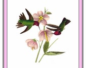 Hummingbirds Inspired by an Illustration by John James Audubon Counted Cross Stitch Chart