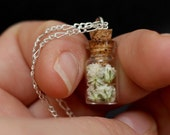 Baby's Breath Tiny Bottle Necklace with Free Pressed Flower Gift Box