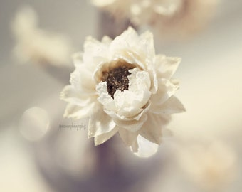 Shabby Chic Floral Photography Print, White Flower Print, Shabby Chic Flower Photography, Brown and White Art, Flower Fine Art Photography
