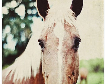 Year of the horse, horse photography, fine art print, le cheval