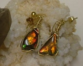 Bright Red, Green, Yellow and Gold Fire Ammolite from Utah Deposit Earrings in Gold Filled Wire 213