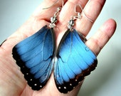 Blue and Black Butterfly Earrings, Morpho Peleides, Blue Morpho, Blue Butterfly