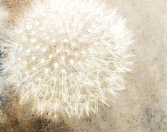 Dandelion Photograph Brown Cream White Wall Decor, Nature, Wish, Nursery Decor, Living Room Decor 8x8