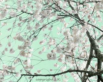 Cherry Blossom Photograph, Pink Mint Green Print, Modern Botanical Photo, Pink Blossoming Tree 8x12