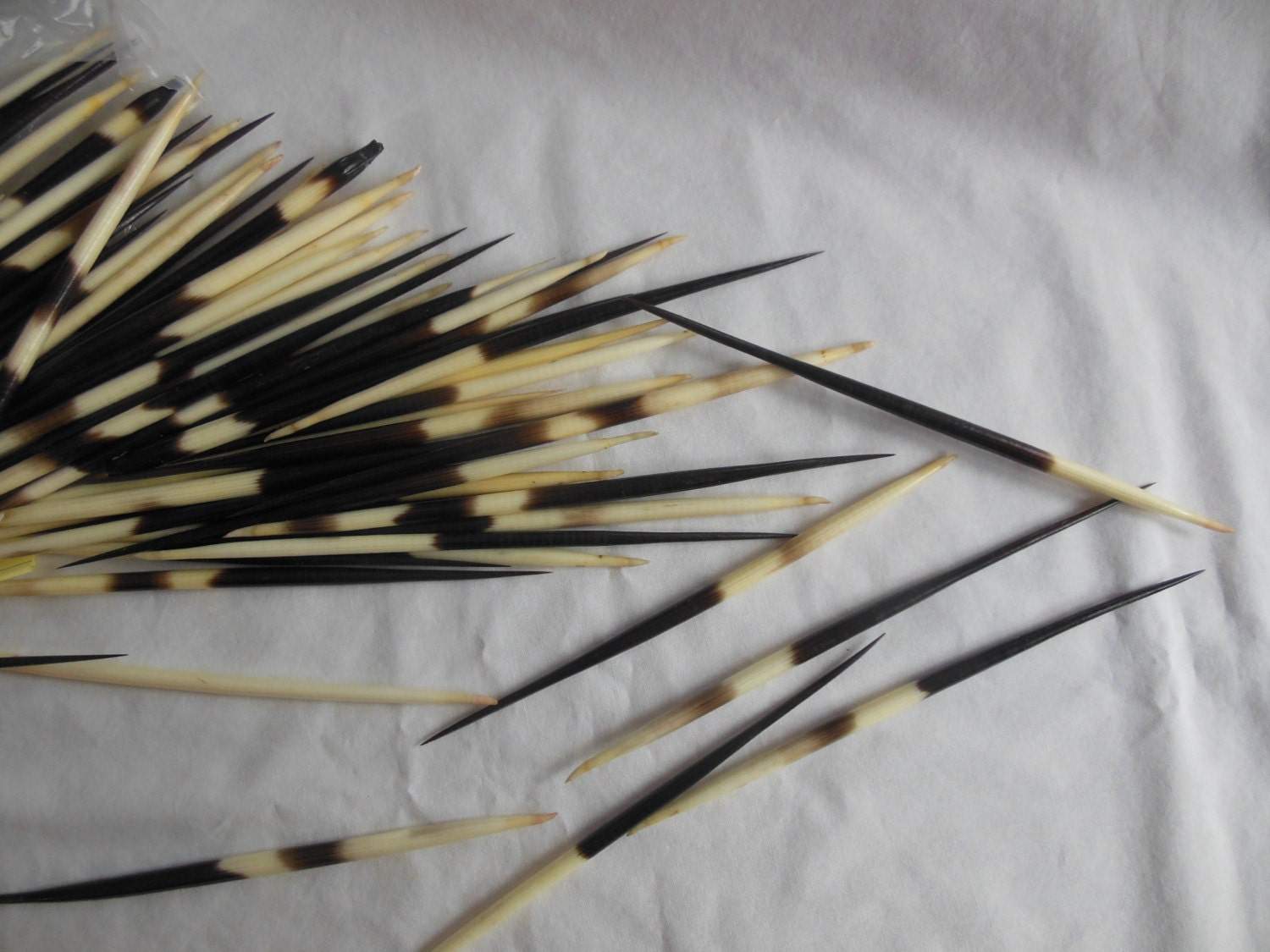 South African Porcupine Quills 7 12 Three quills