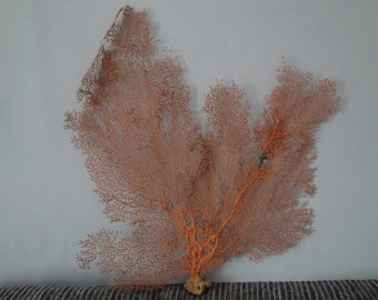 "Pacifigorgia Red Color 15"" x 14.2"" Large Sea Fan Seashells Reef Coral"