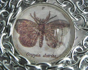 """Moth Specimen ID Under a Clear Cabachon on a Lightweight 32"""" Silvertone Necklace, FREE SHIPPING"""