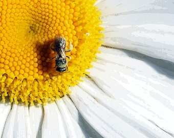 Wee Bee on a Daisy, stylized photograph, instant digital download, 5x5 jpg