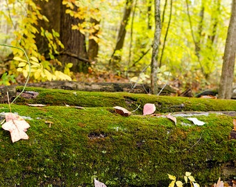 Mossy Log Photo Nature Landscape Photography Fall Autumn Leaves Green Forest Indiana Photos Fine Art Photography Home Decor Wall Art