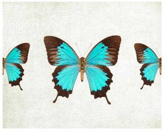 Blue Butterfly photo, turquoise butterflies print, butterfly art print pretty wall art, spring wall decor nursery decor fine art print