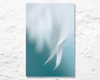 angel wings fine art photograph feather photo wall decor nursery art blue white aqua nature photography