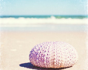 "Sea Urchin Print - seashell beach photography blue pale purple pastel lavender pink shell photo cream - 8x8 Photograph, ""Walking the Shore"""