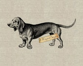 Dachshund Instant Download Digital Image No.264 Iron-On Transfer to Fabric (burlap, linen) Paper Prints (cards, tags)