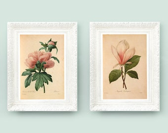 8x11 Redoute Botanical Print Set. Pink White Flower Lily Rose. 2x Vintage Redoute Prints. Wildflower French Encyclopedia Illustration RD1