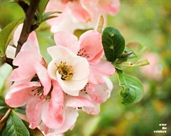 Cherry blossom art, Nature photography, Spring Impressions, Flower print , Pink and Peach, Apple blossom, Engagement gift, Bedroom wall art