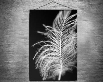 Pure - multiple sizes fine art photo - black white gray bird feather macro - free U.S. shipping