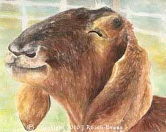 Smiling Goat Large Print