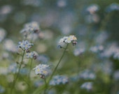 Blue Flower Photography, Nature Wall Art, Floral Home Decor, Summer Photograph, Flower Picture, For Get Me Not Photo