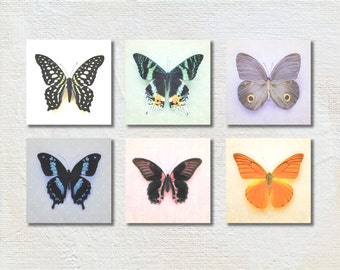 Butterfly Photography Set, Baby Girl Nursery Art, Butterfly Photograph Set, Six Prints, Colorful Wall Art